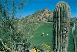 Golfing in Tucson - Photo courtesy of the Metropolitan Tucson Convention & Visitors Bureau